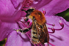 ../images/animals/abeille3.jpg