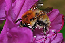 ../images/animals/abeille4.jpg